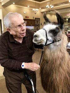 pet therapy llamas